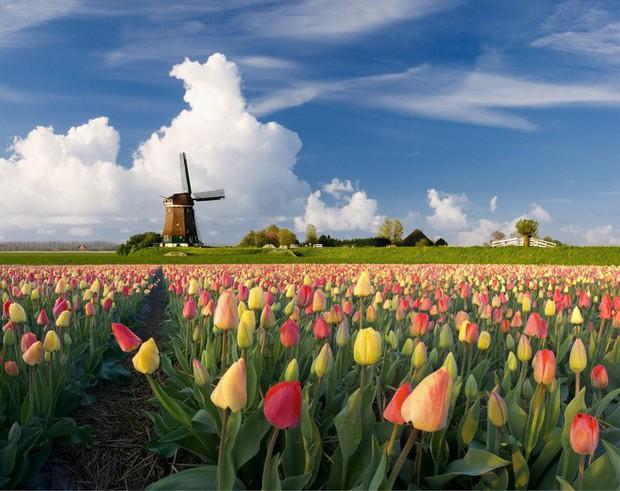 Quốc gia này có diện tích chỉ bằng 1/8 Việt Nam nhưng lại chi phối ngành hoa 100 tỷ USD thế giới: Đầu tư công nghệ, giao dịch hoa như cổ phiếu - Ảnh 3.