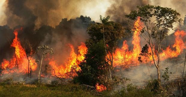 Sự thật về loạt hình thú rừng chết cháy ở Amazon gây ám ảnh: Hỏa hoạn và những cái chết là thật, nhưng không liên quan đến nhau! - Ảnh 3.