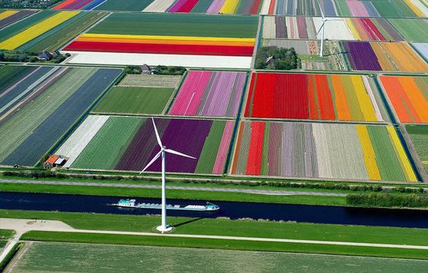 Quốc gia này có diện tích chỉ bằng 1/8 Việt Nam nhưng lại chi phối ngành hoa 100 tỷ USD thế giới: Đầu tư công nghệ, giao dịch hoa như cổ phiếu - Ảnh 4.