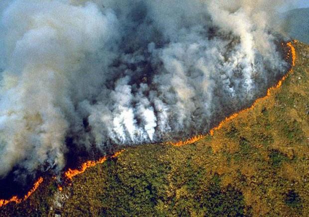Sự thật về loạt hình thú rừng chết cháy ở Amazon gây ám ảnh: Hỏa hoạn và những cái chết là thật, nhưng không liên quan đến nhau! - Ảnh 4.