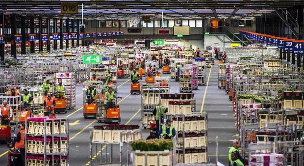 Quốc gia này có diện tích chỉ bằng 1/8 Việt Nam nhưng lại chi phối ngành hoa 100 tỷ USD thế giới: Đầu tư công nghệ, giao dịch hoa như cổ phiếu - Ảnh 6.