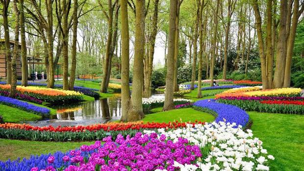 Quốc gia này có diện tích chỉ bằng 1/8 Việt Nam nhưng lại chi phối ngành hoa 100 tỷ USD thế giới: Đầu tư công nghệ, giao dịch hoa như cổ phiếu - Ảnh 10.