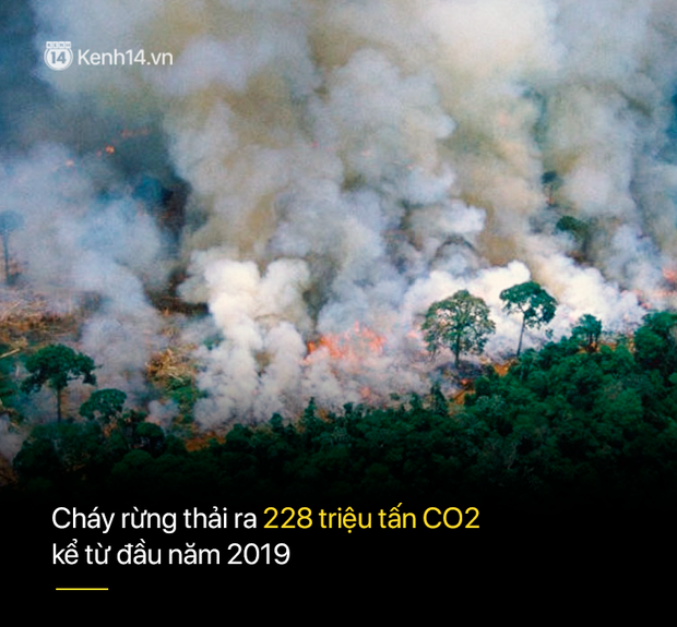 8 tháng 100.000 vụ cháy, thảm họa tầm cỡ địa cầu: Đây là tình hình cháy rừng đang diễn ra tại Amazon vào lúc này - Ảnh 5.