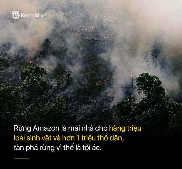 8 tháng 100.000 vụ cháy, thảm họa tầm cỡ địa cầu: Đây là tình hình cháy rừng đang diễn ra tại Amazon vào lúc này - Ảnh 9.
