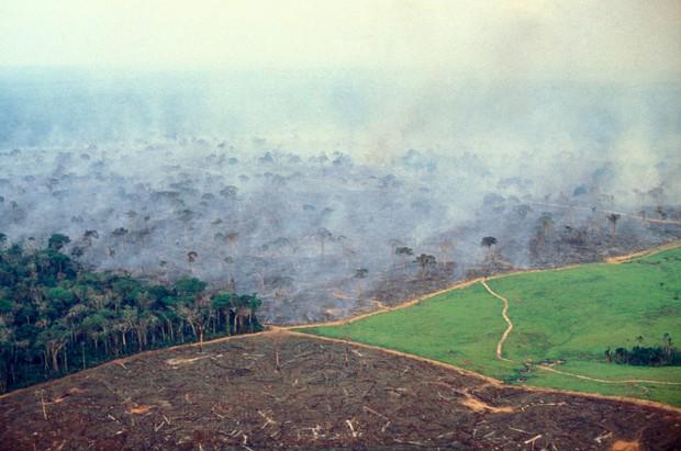 10% loài động vật trên hành tinh như sống trong hỏa ngục vì cháy rừng Amazon: Hậu quả đáng sợ hơn bất kì vụ cháy rừng nào khác - Ảnh 5.