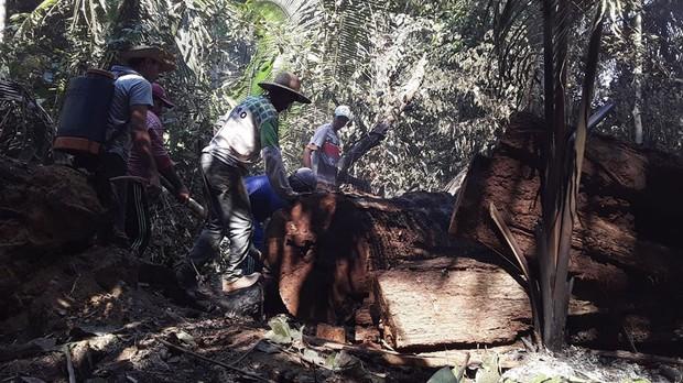 Thảm cảnh của thổ dân trước vụ cháy rừng Amazon tàn khốc nhất lịch sử: Chúng tôi đã khóc khi dập lửa, nhiều gia đình mất hết tất cả - Ảnh 5.