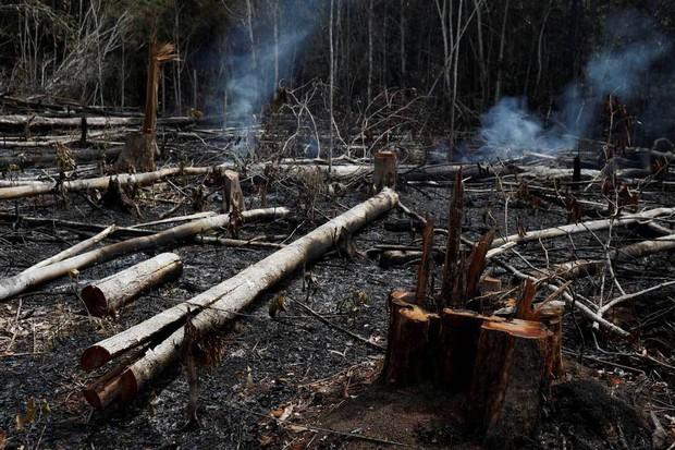 Tại sao rừng Amazon cháy đến tận 3 tuần chúng ta mới nhận ra sự việc đã trở nên nghiêm trọng đến mức nào? - Ảnh 9.