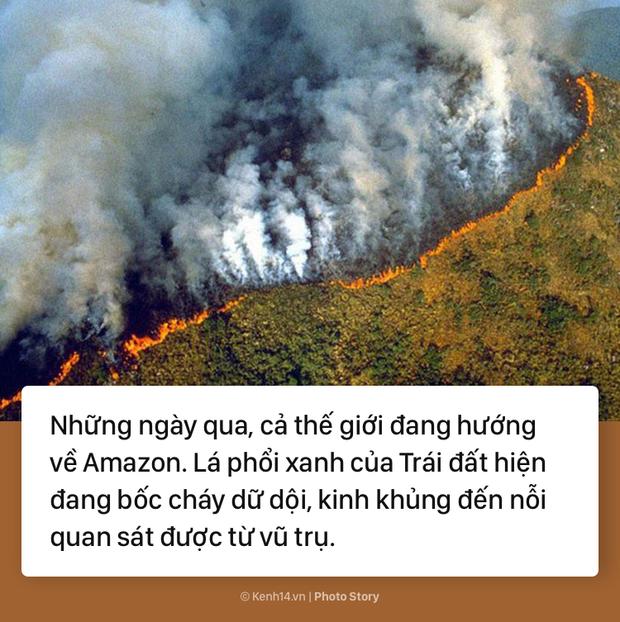 Toàn cảnh thảm hoạ cháy rừng Amazon khiến cả thế giới bàng hoàng - Ảnh 1.