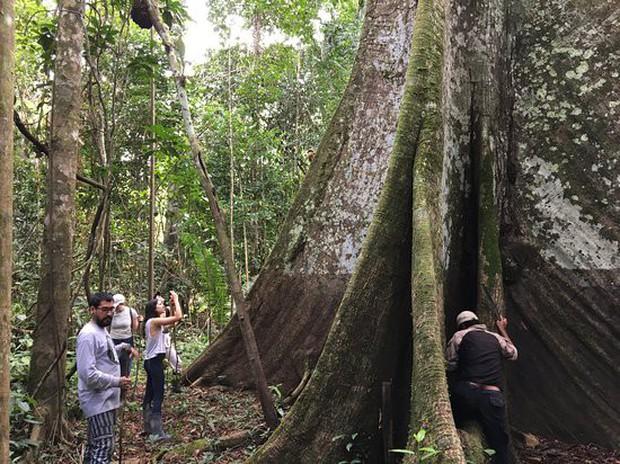 Dù bị cháy rụi nhưng 5 bí ẩn này của Amazon vẫn chưa có câu trả lời: Liệu con người có thể du lịch ở 1 nơi rộng lớn như vậy không? - Ảnh 5.