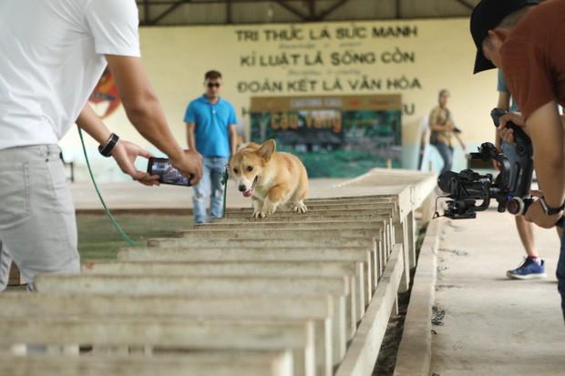 Ai đời lựa vai cho cậu Cậu Vàng là chú chó Nhật, hội yêu văn học phẫn nộ: Sao không chọn Husky luôn đi? - Ảnh 2.