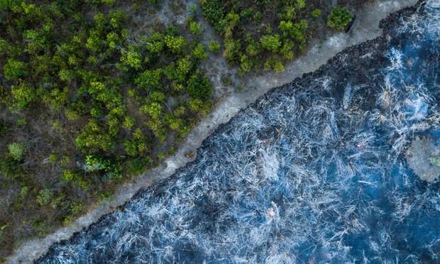 5 cách giải cứu rừng Amazon từ Quỹ Quốc tế Bảo vệ Thiên nhiên WWF: Hãy đọc ngay để biết bạn nên làm gì lúc này - Ảnh 7.