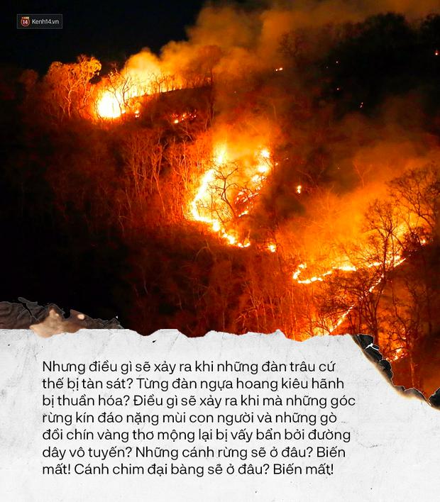 Bức thư của thủ lĩnh da đỏ - Lời cảnh tỉnh từ quá khứ trong những ngày Amazon bùng cháy - Ảnh 3.