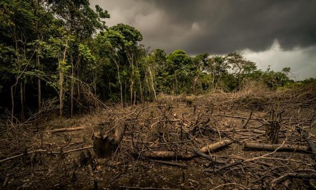 5 cách giải cứu rừng Amazon từ Quỹ Quốc tế Bảo vệ Thiên nhiên WWF: Hãy đọc ngay để biết bạn nên làm gì lúc này - Ảnh 3.