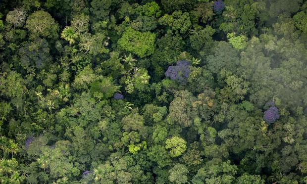 5 cách giải cứu rừng Amazon từ Quỹ Quốc tế Bảo vệ Thiên nhiên WWF: Hãy đọc ngay để biết bạn nên làm gì lúc này - Ảnh 5.