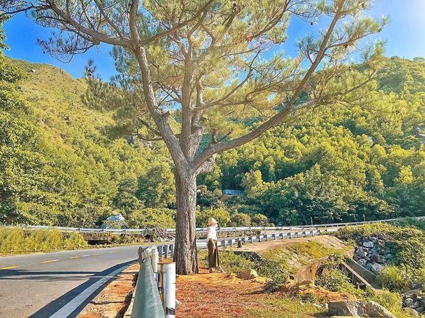 """Hot nhất Đà Nẵng hiện tại chính là """"cổng trời"""" mới toanh dưới chân đèo Hải Vân, nơi có đoàn tàu qua núi đẹp hệt trong phim - Ảnh 1."""