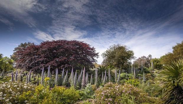 Thay đổi khí hậu khiến một loài cây hồi sinh sau 60 triệu năm ở Anh - Ảnh 3.