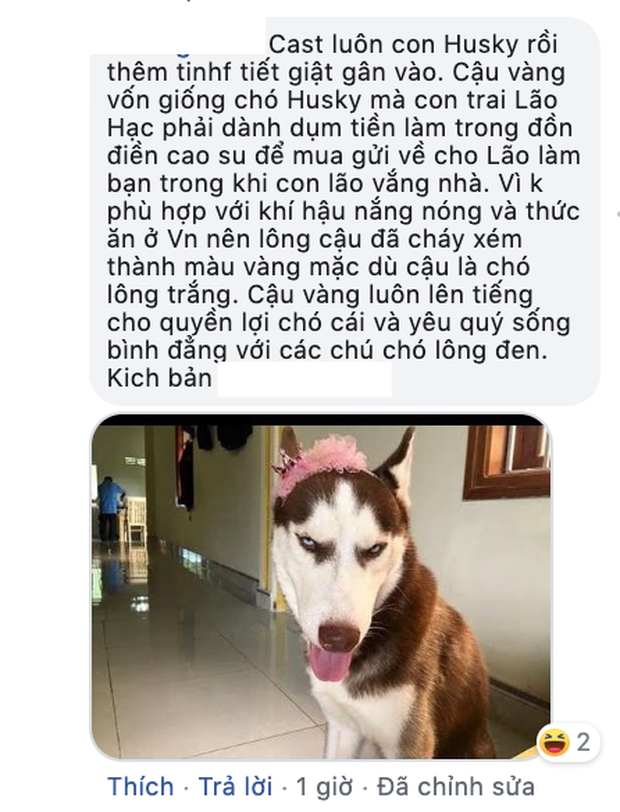 Ai đời lựa vai cho cậu Cậu Vàng là chú chó Nhật, hội yêu văn học phẫn nộ: Sao không chọn Husky luôn đi? - Ảnh 7.