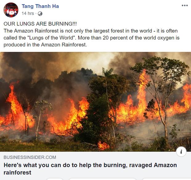 Giới trẻ Việt Nam: Bạn hãy đừng nghĩ cháy rừng Amazon là điều gì đó quá xa xôi! - Ảnh 2.