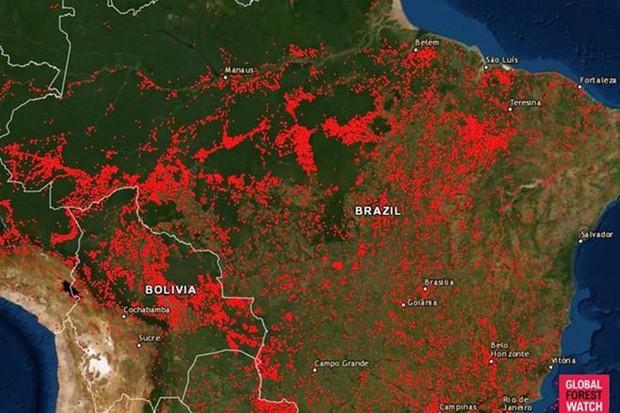 Cháy rừng Amazon tàn phá trái đất như vũ khí huỷ diệt hàng loạt - Ảnh 1.