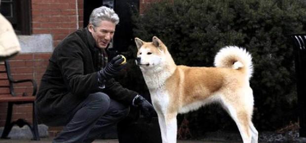 Giả thuyết về pha bẻ lái cực gắt của Cậu Vàng shiba: Boss của lão Hạc là chú chó Hachiko huyền thoại năm nào? - Ảnh 5.