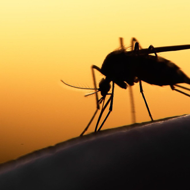 Bé nhỏ là thế, tại sao muỗi có thể đe dọa mạng sống của một nửa dân số thế giới? - Ảnh 9.