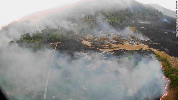 10% loài động vật trên hành tinh như sống trong hỏa ngục vì cháy rừng Amazon: Hậu quả đáng sợ hơn bất kì vụ cháy rừng nào khác - Ảnh 2.