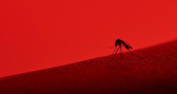 Bé nhỏ là thế, tại sao muỗi có thể đe dọa mạng sống của một nửa dân số thế giới? - Ảnh 10.