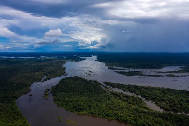 10% loài động vật trên hành tinh như sống trong hỏa ngục vì cháy rừng Amazon: Hậu quả đáng sợ hơn bất kì vụ cháy rừng nào khác - Ảnh 1.