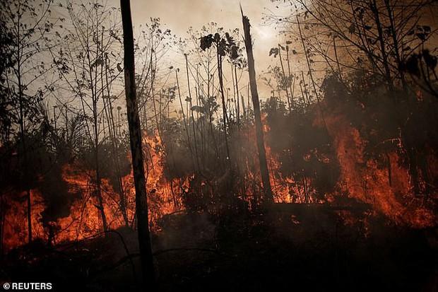 Dân bản địa Brazil gào khóc trước cảnh tượng rừng Amazon bốc cháy: Họ đang giết chết những dòng sông và nguồn sống của chúng tôi - Ảnh 3.