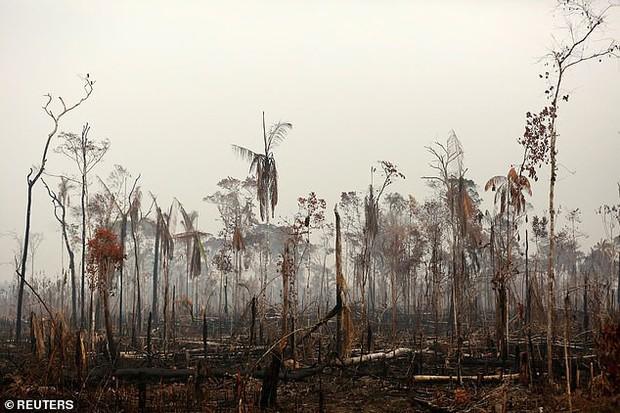 Dân bản địa Brazil gào khóc trước cảnh tượng rừng Amazon bốc cháy: Họ đang giết chết những dòng sông và nguồn sống của chúng tôi - Ảnh 4.