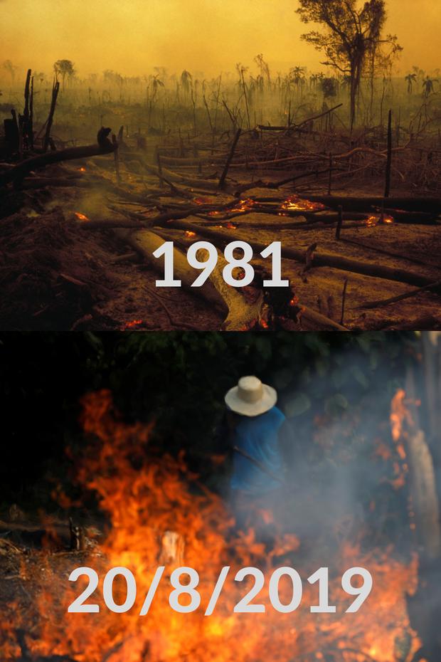 Loạt ảnh Amazon trước và sau đại nạn cháy rừng 2019: Lá phổi xanh ngày nào đã mang đầy bệnh tật do con người đầu độc - Ảnh 3.