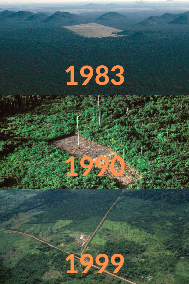 Loạt ảnh Amazon trước và sau đại nạn cháy rừng 2019: Lá phổi xanh ngày nào đã mang đầy bệnh tật do con người đầu độc - Ảnh 8.