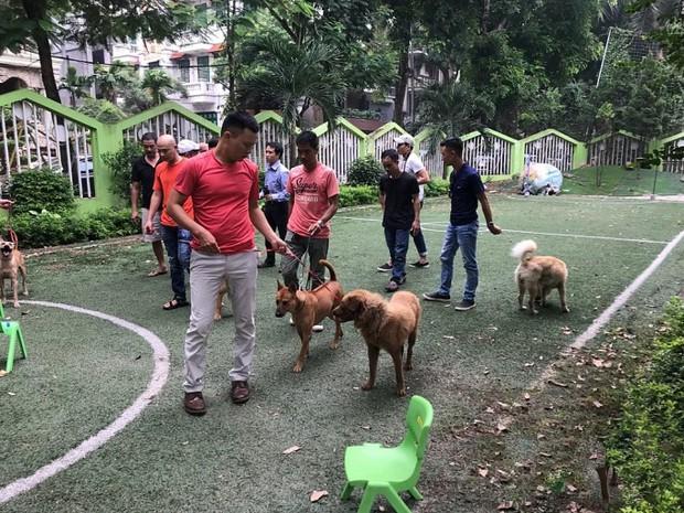 Bị ném đá và thành trò cười của netizen, ekip Cậu Vàng tuyển lại diễn viên yêu cầu 100% chó thuần Việt - Ảnh 2.