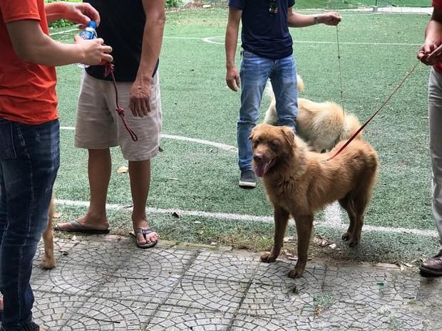Bị ném đá và thành trò cười của netizen, ekip Cậu Vàng tuyển lại diễn viên yêu cầu 100% chó thuần Việt - Ảnh 5.