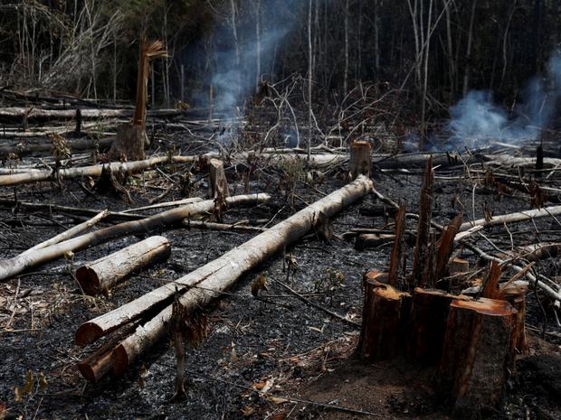 Loạt ảnh Amazon trước và sau đại nạn cháy rừng 2019: Lá phổi xanh ngày nào đã mang đầy bệnh tật do con người đầu độc - Ảnh 11.
