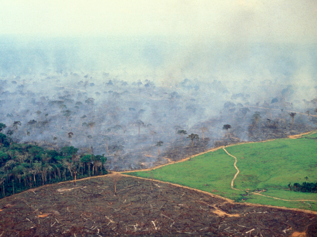 Loạt ảnh Amazon trước và sau đại nạn cháy rừng 2019: Lá phổi xanh ngày nào đã mang đầy bệnh tật do con người đầu độc - Ảnh 9.
