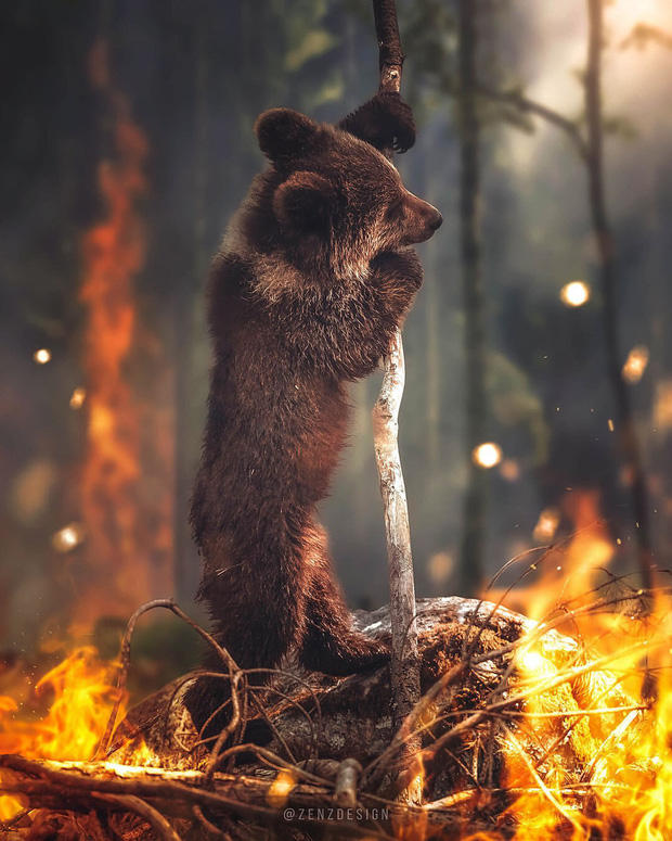 Sự thật về bức ảnh chú gấu nhỏ tuyệt vọng trong biển lửa của trận cháy rừng Amazon - Ảnh 1.
