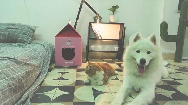 Chàng trai độc thân với một căn phòng nhỏ, một chú chó, một bé mèo: Định nghĩa bình yên kiểu mới là đây! - Ảnh 2.