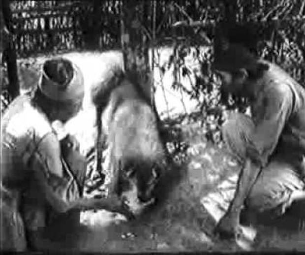 4 em chó ta trên màn ảnh Việt: Nhìn cưng mà diễn tự nhiên, nào có kém cạnh chú Shiba Inu đóng Cậu Vàng? - Ảnh 1.