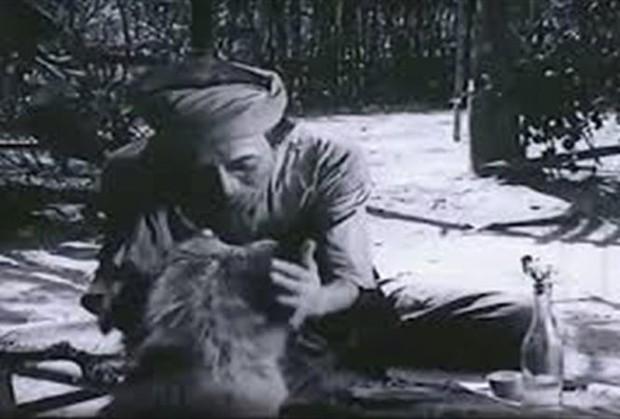 4 em chó ta trên màn ảnh Việt: Nhìn cưng mà diễn tự nhiên, nào có kém cạnh chú Shiba Inu đóng Cậu Vàng? - Ảnh 2.