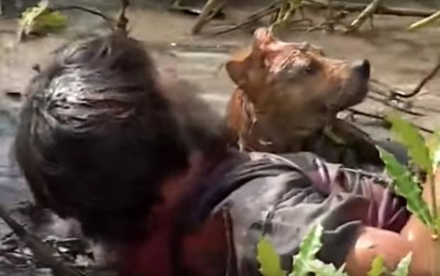 4 em chó ta trên màn ảnh Việt: Nhìn cưng mà diễn tự nhiên, nào có kém cạnh chú Shiba Inu đóng Cậu Vàng? - Ảnh 4.