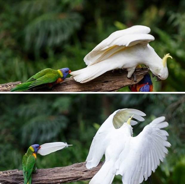 Bật cười trước những khoảnh khắc ngẫu hứng đầy thú vị của loài chim - Ảnh 11.