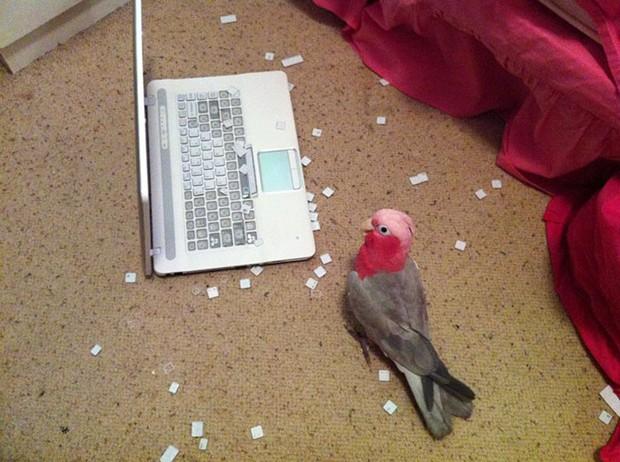 Bật cười trước những khoảnh khắc ngẫu hứng đầy thú vị của loài chim - Ảnh 12.