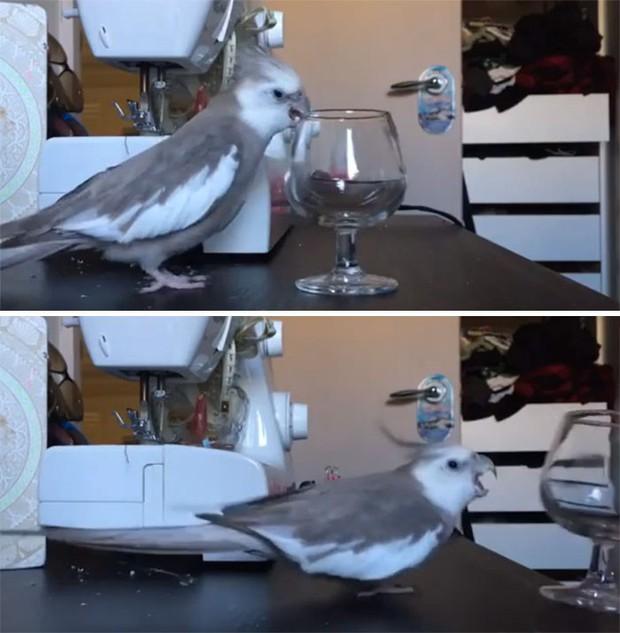 Bật cười trước những khoảnh khắc ngẫu hứng đầy thú vị của loài chim - Ảnh 13.