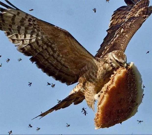 Bật cười trước những khoảnh khắc ngẫu hứng đầy thú vị của loài chim - Ảnh 14.