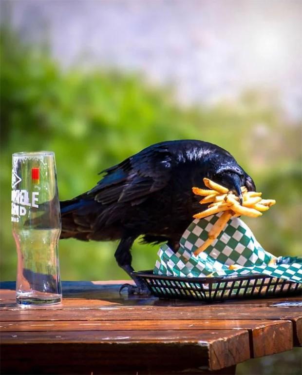 Bật cười trước những khoảnh khắc ngẫu hứng đầy thú vị của loài chim - Ảnh 15.