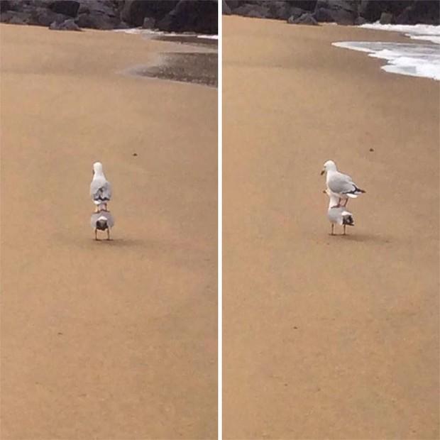 Bật cười trước những khoảnh khắc ngẫu hứng đầy thú vị của loài chim - Ảnh 3.