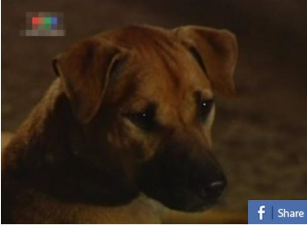 4 em chó ta trên màn ảnh Việt: Nhìn cưng mà diễn tự nhiên, nào có kém cạnh chú Shiba Inu đóng Cậu Vàng? - Ảnh 5.