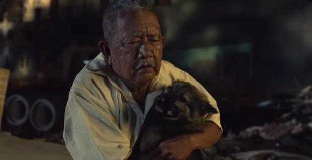 4 em chó ta trên màn ảnh Việt: Nhìn cưng mà diễn tự nhiên, nào có kém cạnh chú Shiba Inu đóng Cậu Vàng? - Ảnh 7.