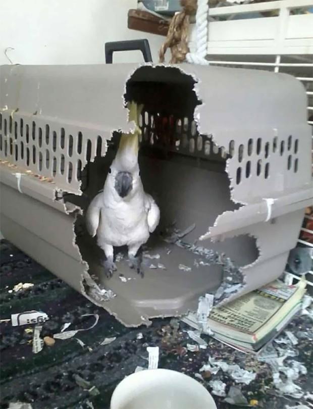 Bật cười trước những khoảnh khắc ngẫu hứng đầy thú vị của loài chim - Ảnh 5.